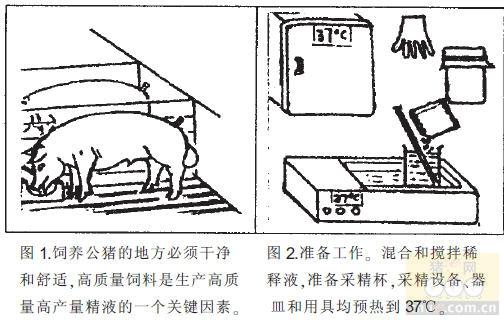 猪人工受精图片 猪繁殖障碍病 视频兽医网论坛 执业兽医师